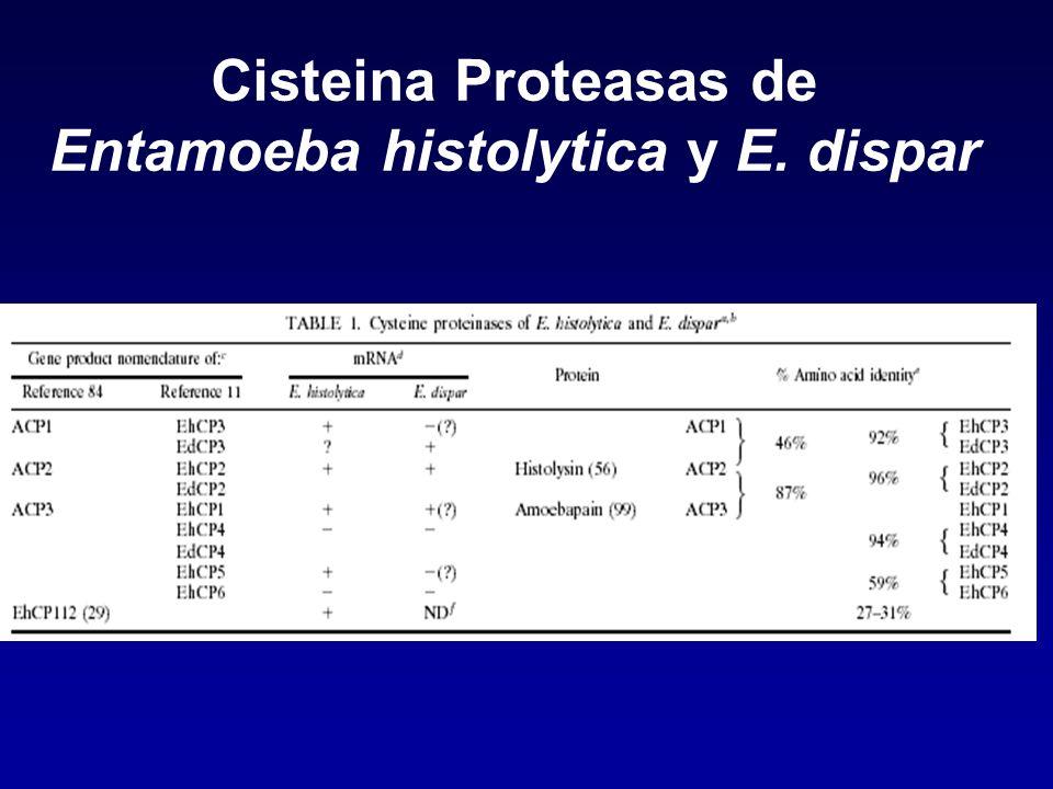 Cisteina Proteasas de Entamoeba histolytica y E. dispar