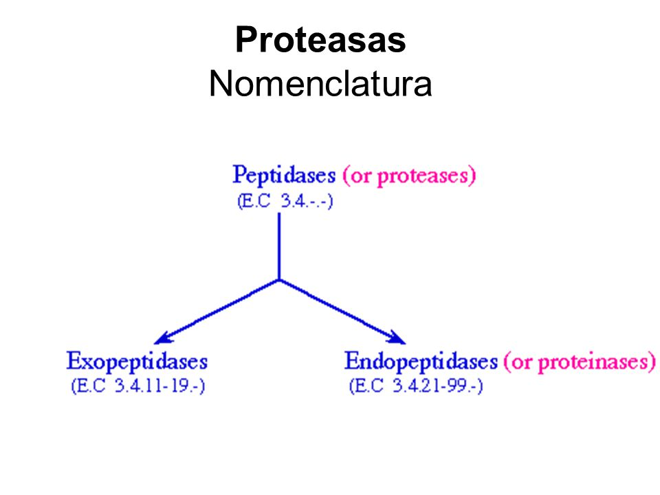 Proteasas Nomenclatura