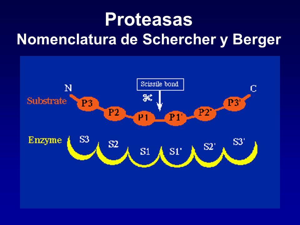 Proteasas Nomenclatura de Schercher y Berger