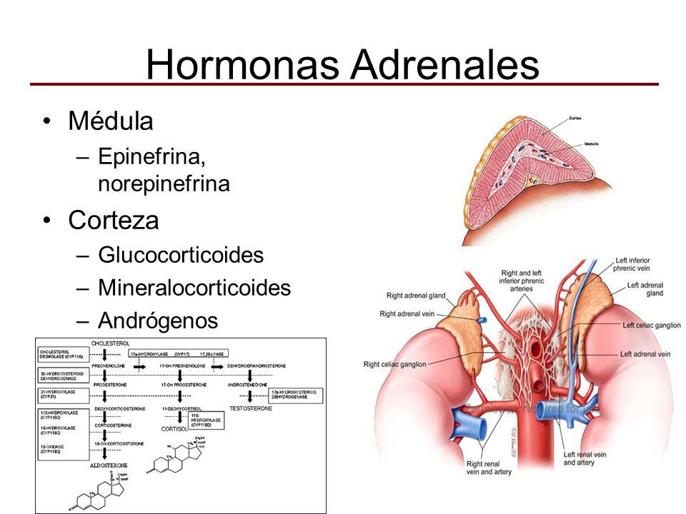 Hormonas Adrenales Médula Corteza Epinefrina, norepinefrina
