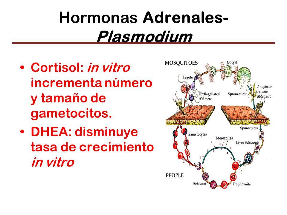 Hormonas Adrenales- Plasmodium