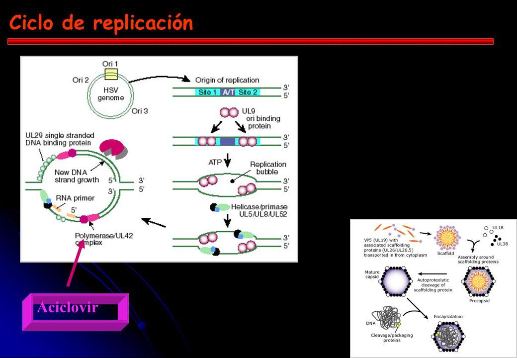 Ciclo de replicación Aciclovir