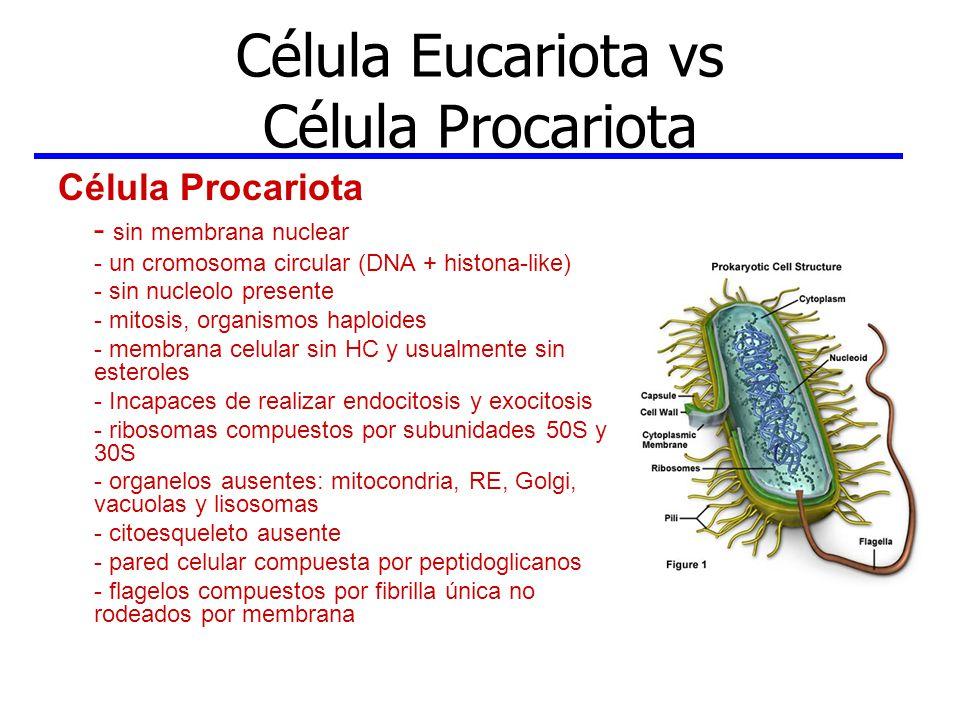 Célula Eucariota vs Célula Procariota