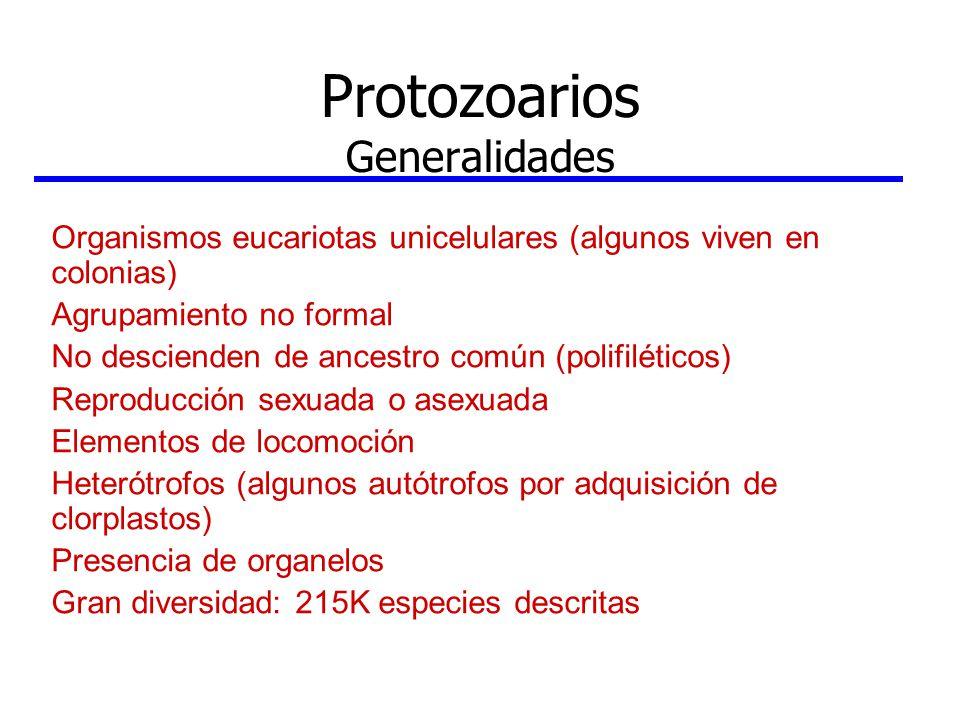 Protozoarios Generalidades