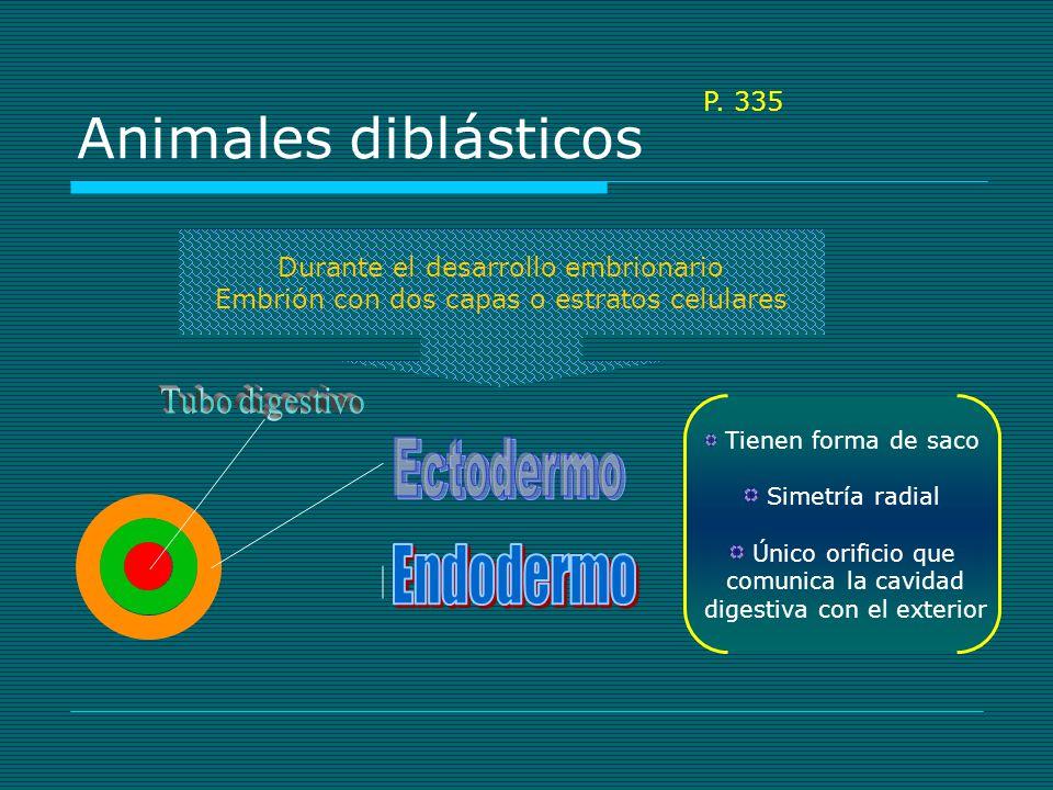 Animales diblásticos Ectodermo Endodermo Tubo digestivo P. 335