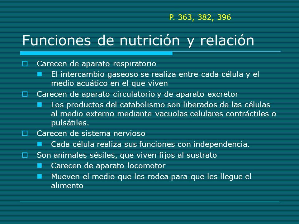 Funciones de nutrición y relación