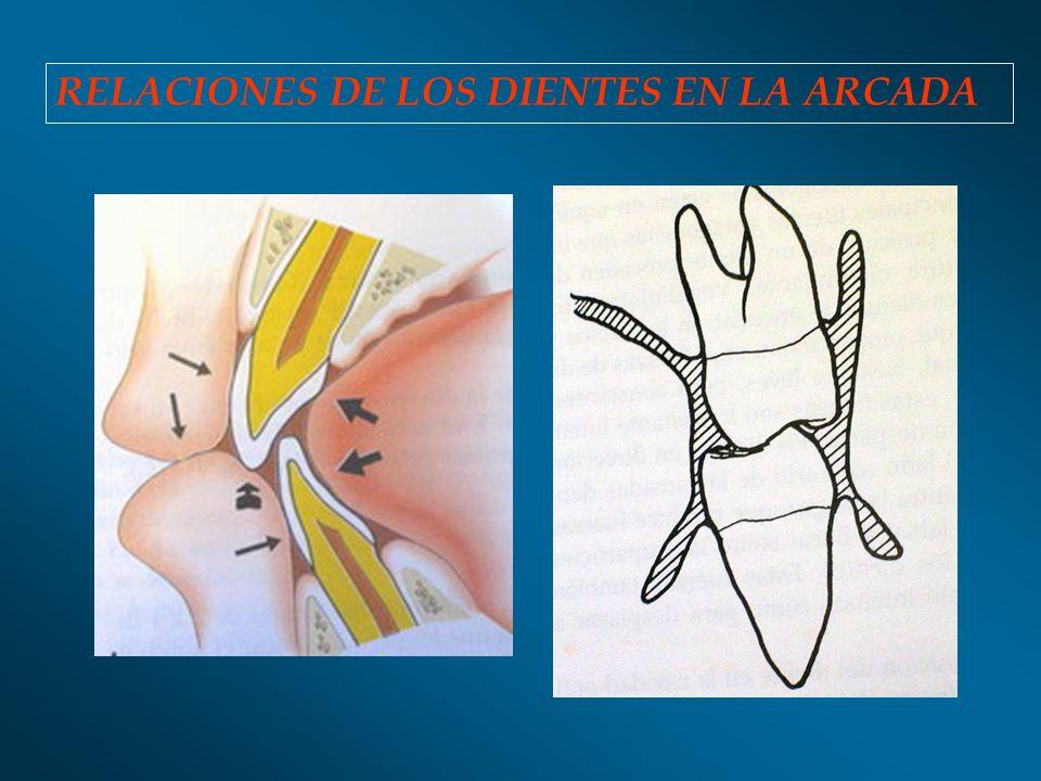 RELACIONES DE LOS DIENTES EN LA ARCADA
