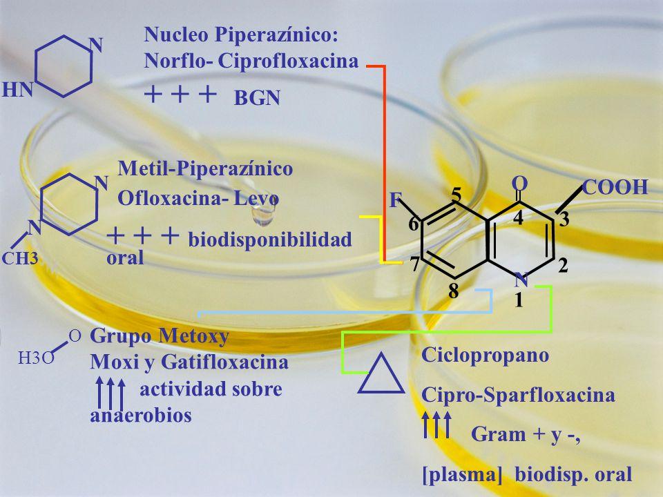 + + + biodisponibilidad oral