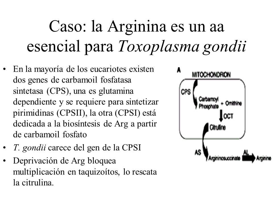 Caso: la Arginina es un aa esencial para Toxoplasma gondii