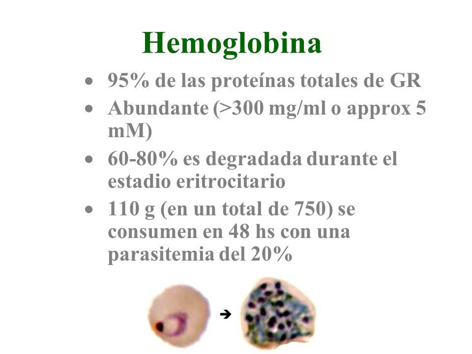 Hemoglobina 95% de las proteínas totales de GR
