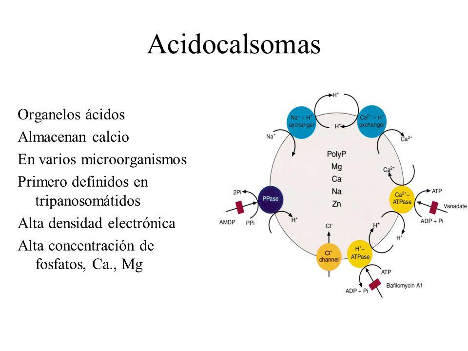Acidocalsomas