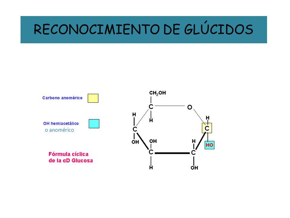 RECONOCIMIENTO DE GLÚCIDOS