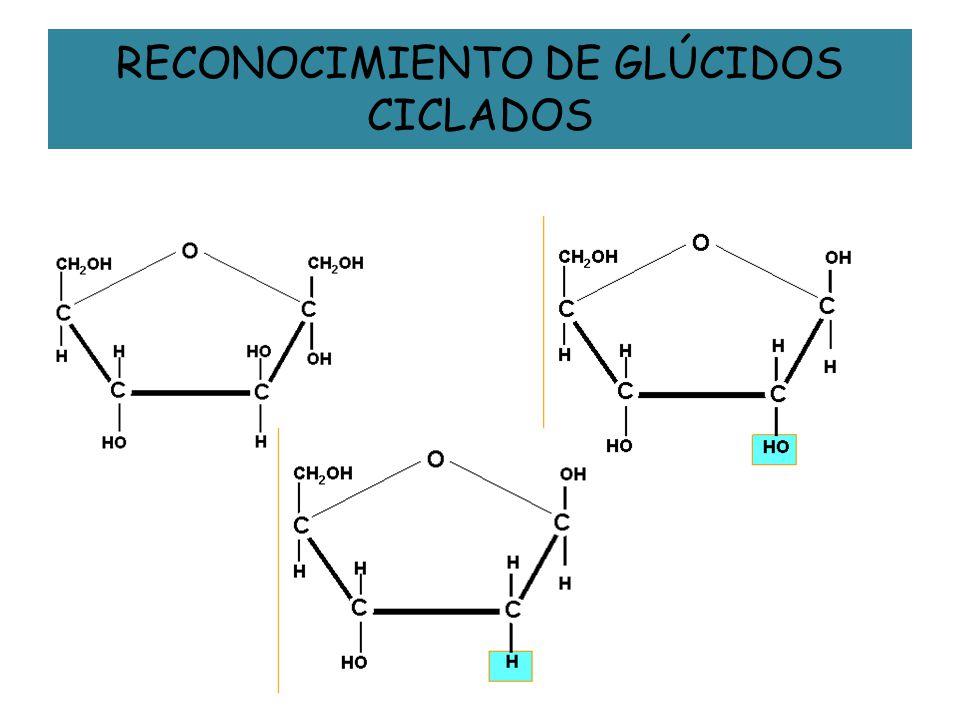 RECONOCIMIENTO DE GLÚCIDOS CICLADOS