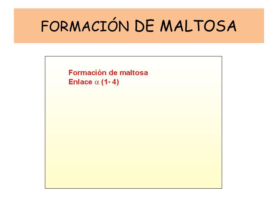 FORMACIÓN DE MALTOSA