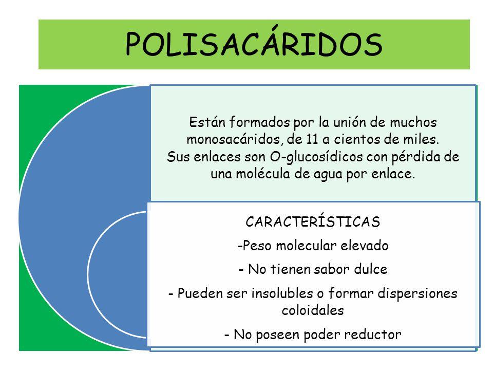 POLISACÁRIDOS CARACTERÍSTICAS