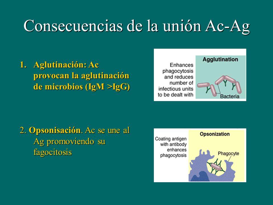 Consecuencias de la unión Ac-Ag