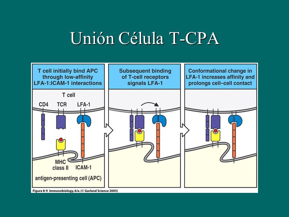 Unión Célula T-CPA