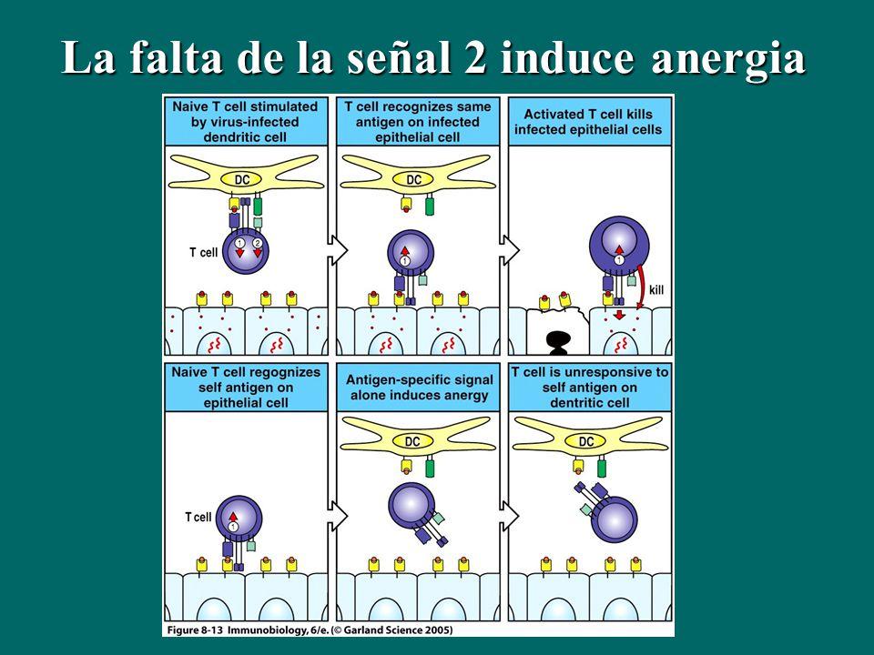 La falta de la señal 2 induce anergia