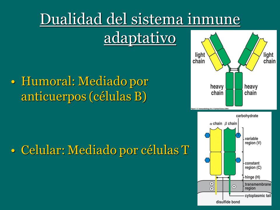 Dualidad del sistema inmune adaptativo