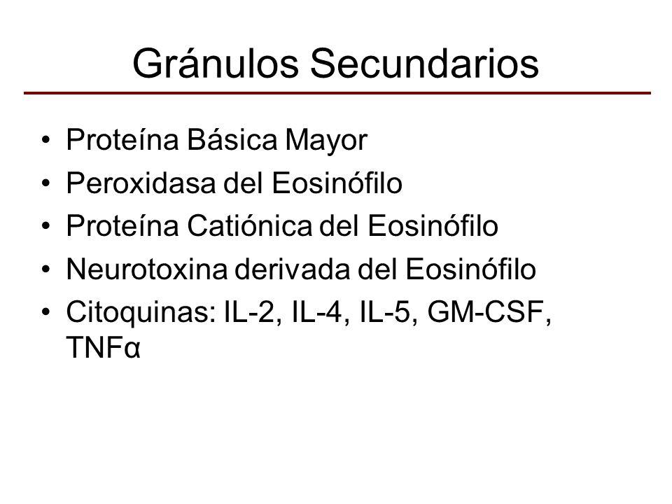 Gránulos Secundarios Proteína Básica Mayor Peroxidasa del Eosinófilo