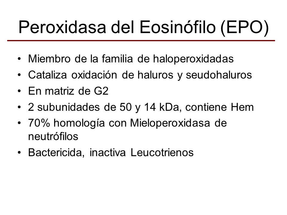 Peroxidasa del Eosinófilo (EPO)