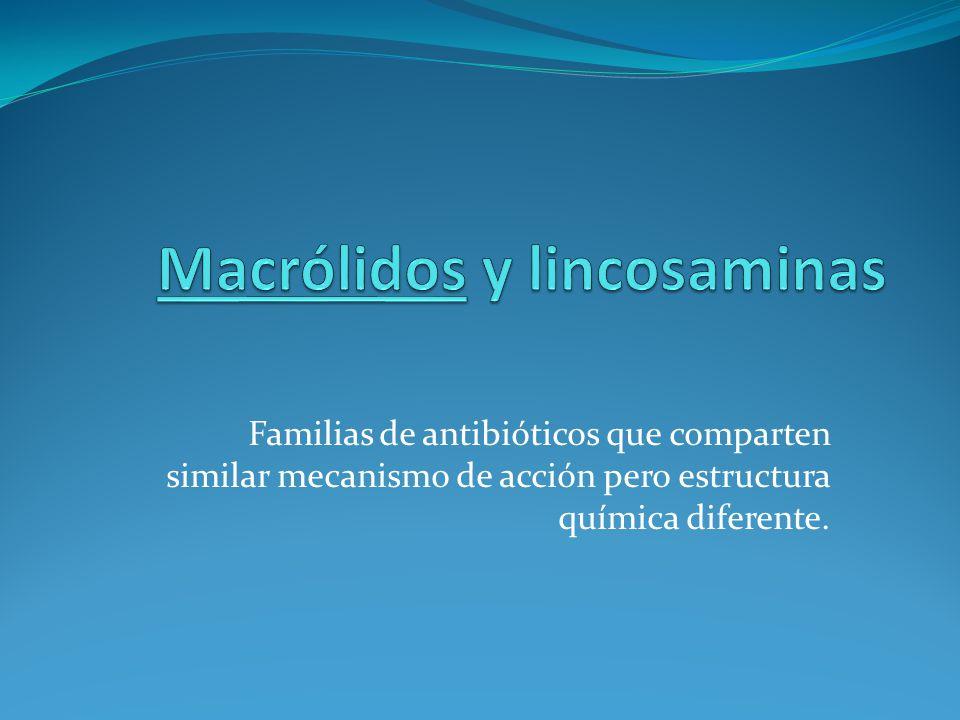 Macrólidos y lincosaminas