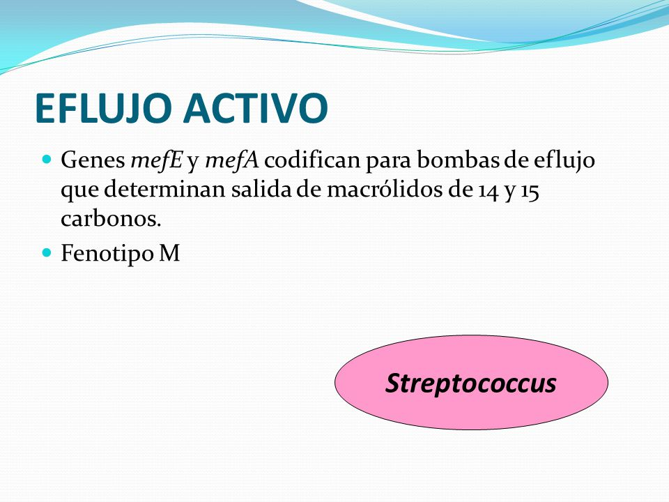 EFLUJO ACTIVO Streptococcus