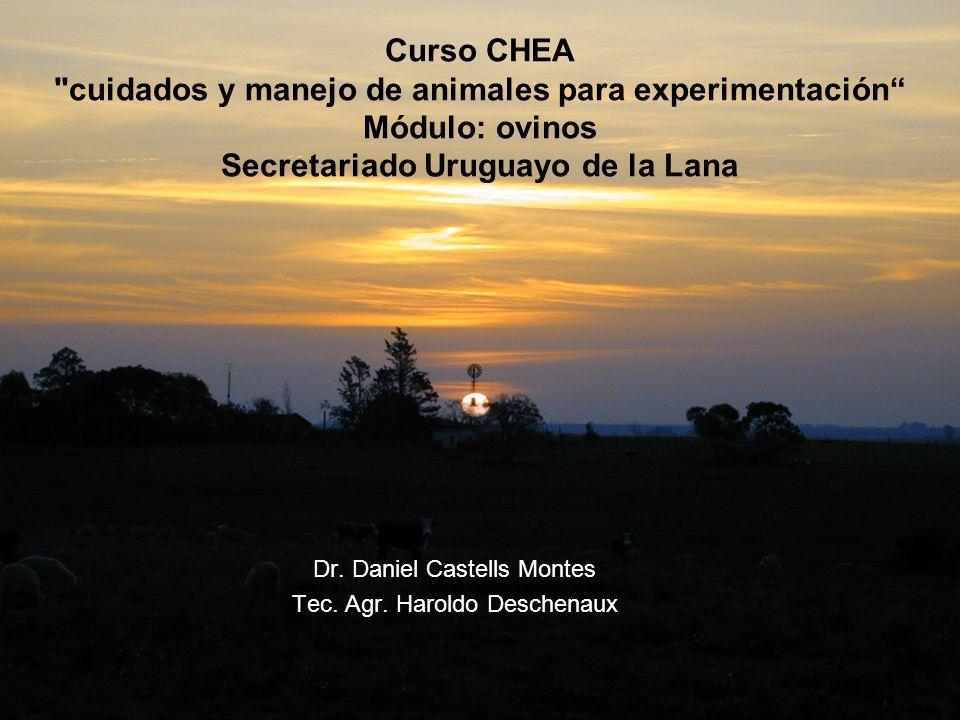 Curso CHEA cuidados y manejo de animales para experimentación Módulo: ovinos Secretariado Uruguayo de la Lana