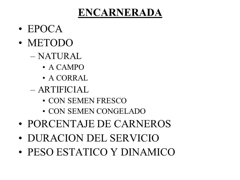 PORCENTAJE DE CARNEROS DURACION DEL SERVICIO PESO ESTATICO Y DINAMICO