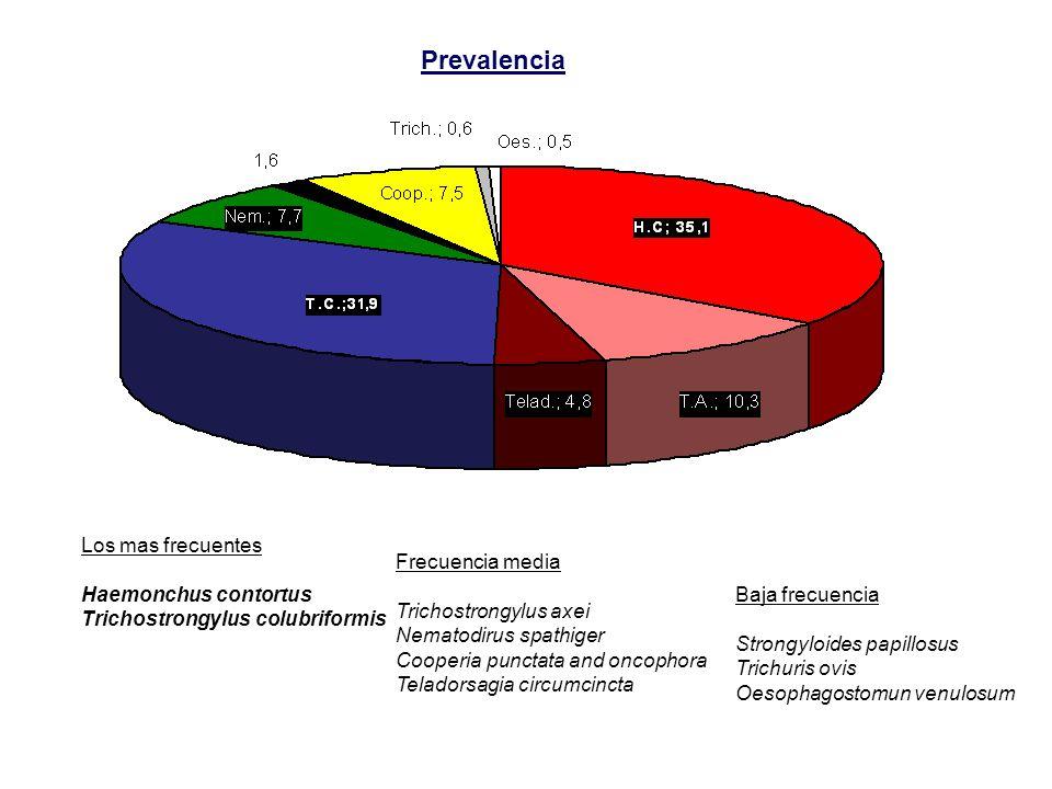 Prevalencia Los mas frecuentes Frecuencia media Haemonchus contortus
