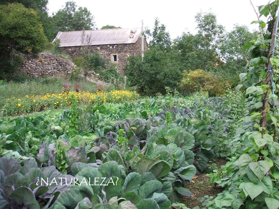 La agricultura como espacio de encuentro entre lo sociocultural y el medio ambiente.