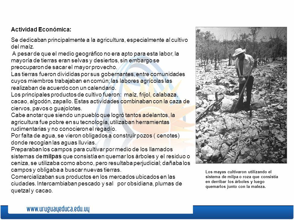 Actividad Económica: Se dedicaban principalmente a la agricultura, especialmente al cultivo del maíz.