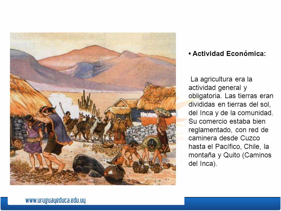 • Actividad Económica: