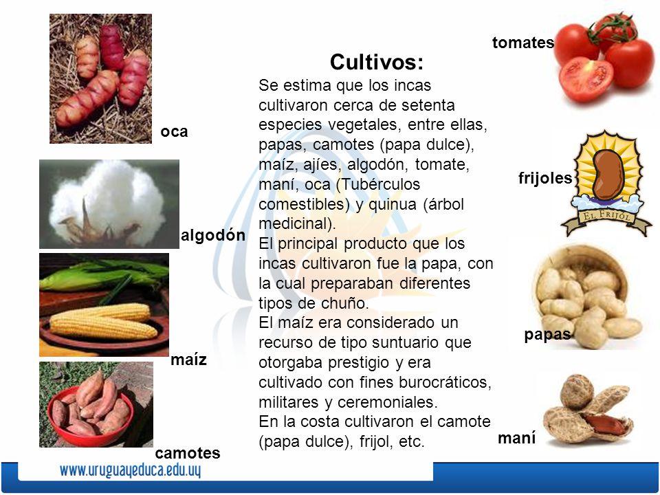 tomates Cultivos: