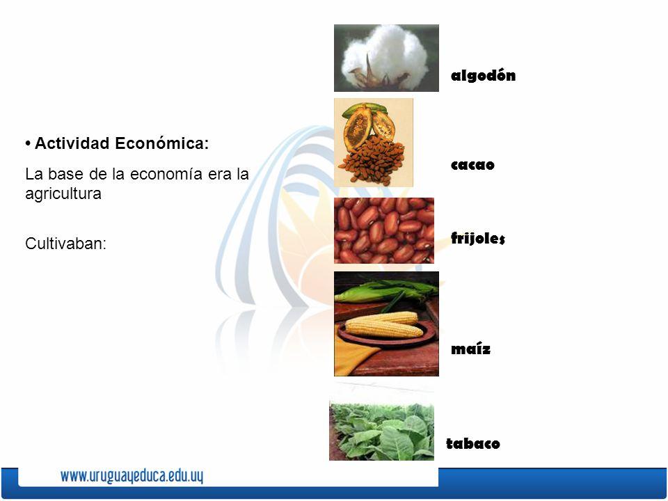 algodón • Actividad Económica: La base de la economía era la agricultura. Cultivaban: cacao. frijoles.
