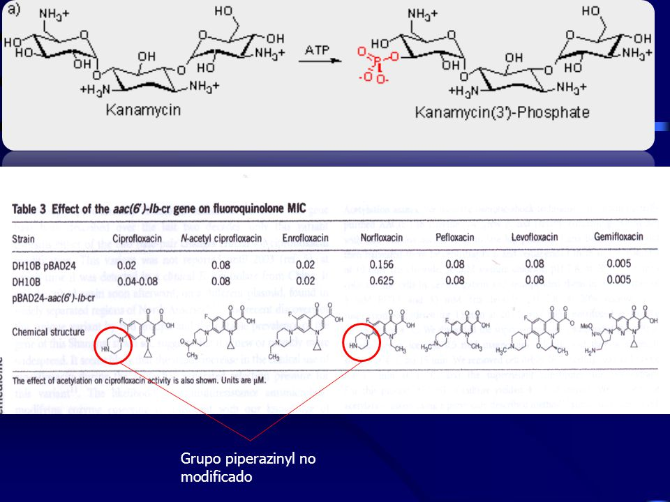 Grupo piperazinyl no modificado