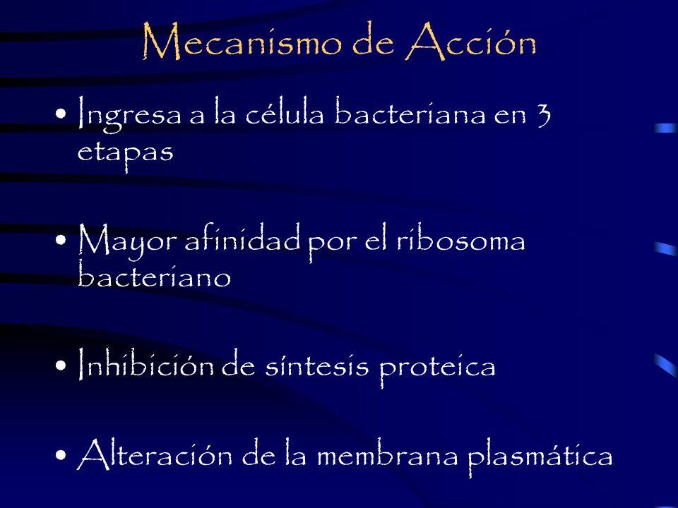 Mecanismo de Acción Ingresa a la célula bacteriana en 3 etapas