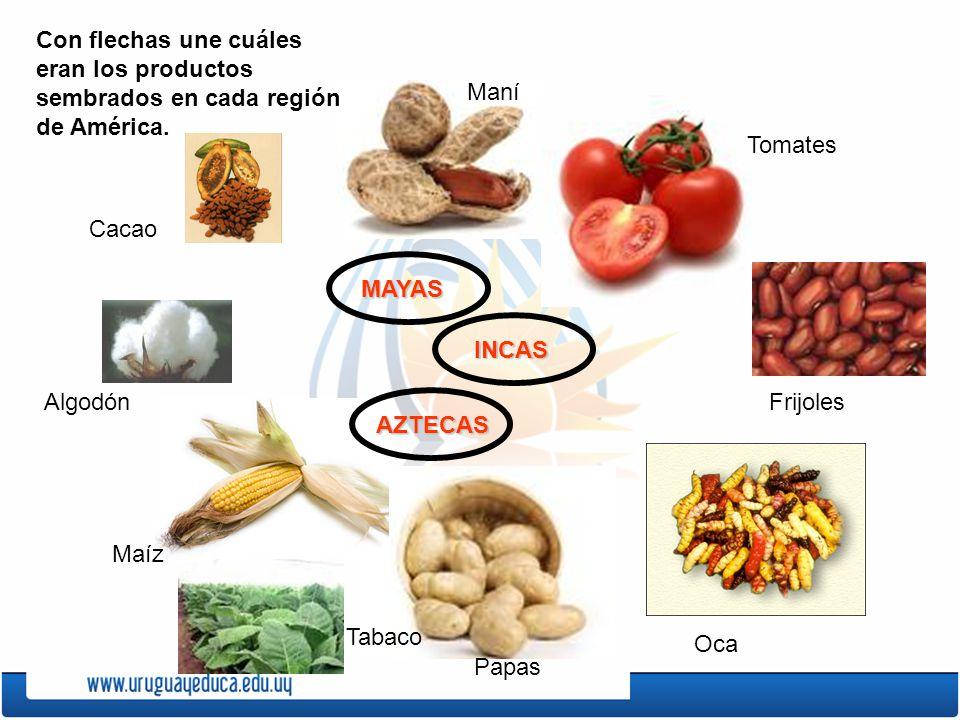 Con flechas une cuáles eran los productos sembrados en cada región de América.