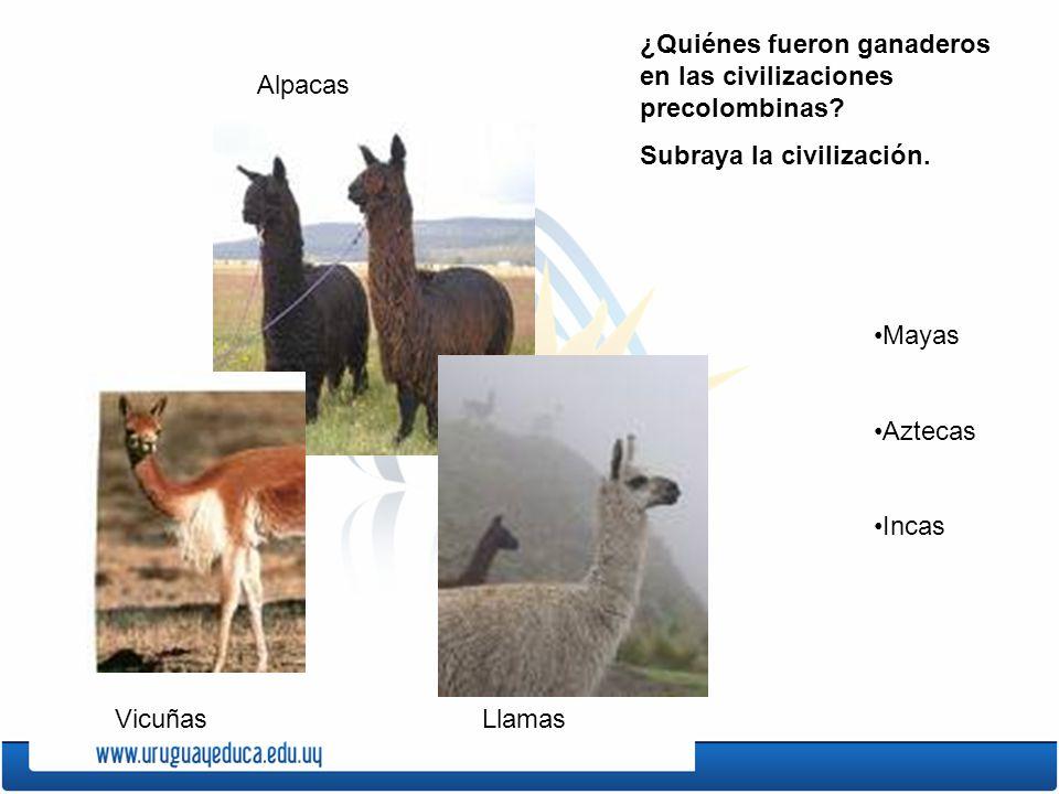 Las grandes civilizaciones ppt video online descargar for Terrazas 14 vicuna