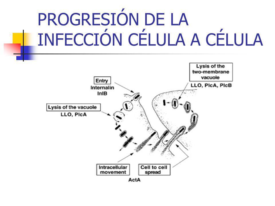 PROGRESIÓN DE LA INFECCIÓN CÉLULA A CÉLULA
