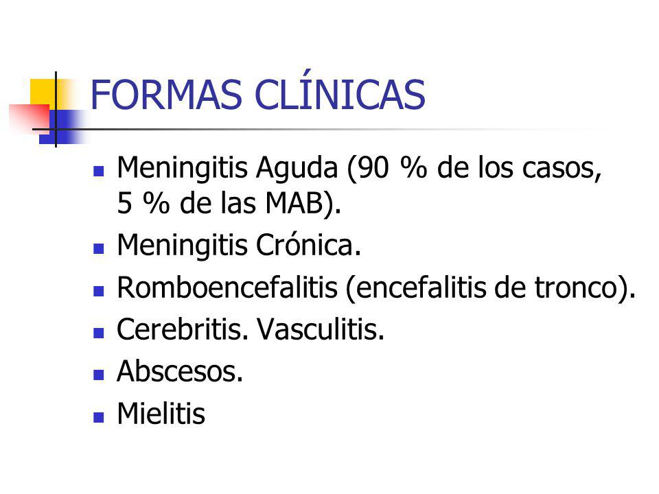 FORMAS CLÍNICAS Meningitis Aguda (90 % de los casos, 5 % de las MAB).