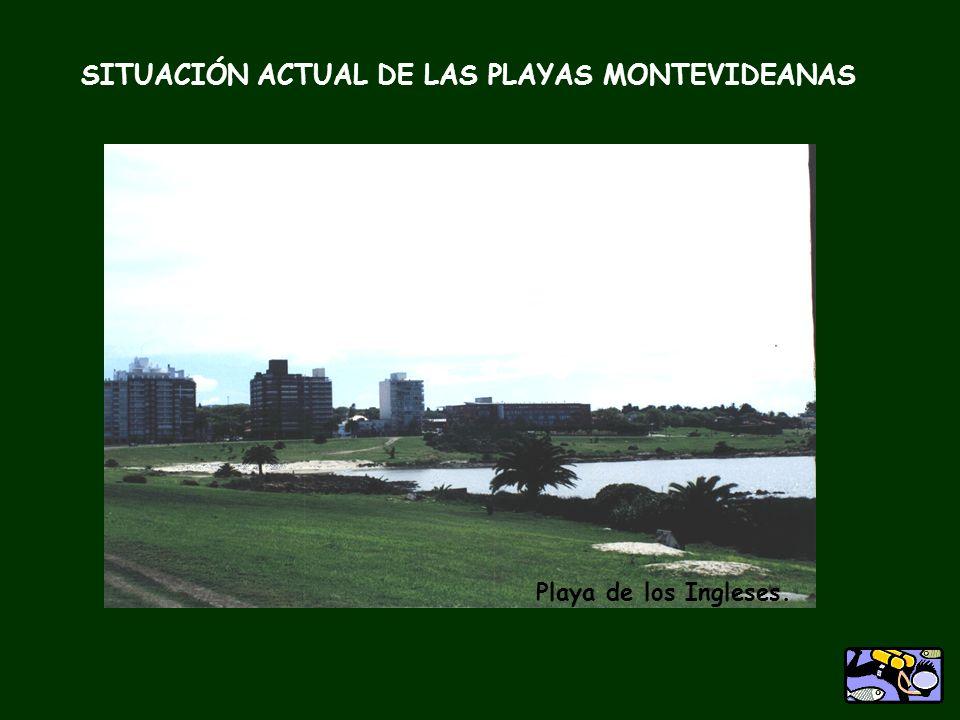 SITUACIÓN ACTUAL DE LAS PLAYAS MONTEVIDEANAS