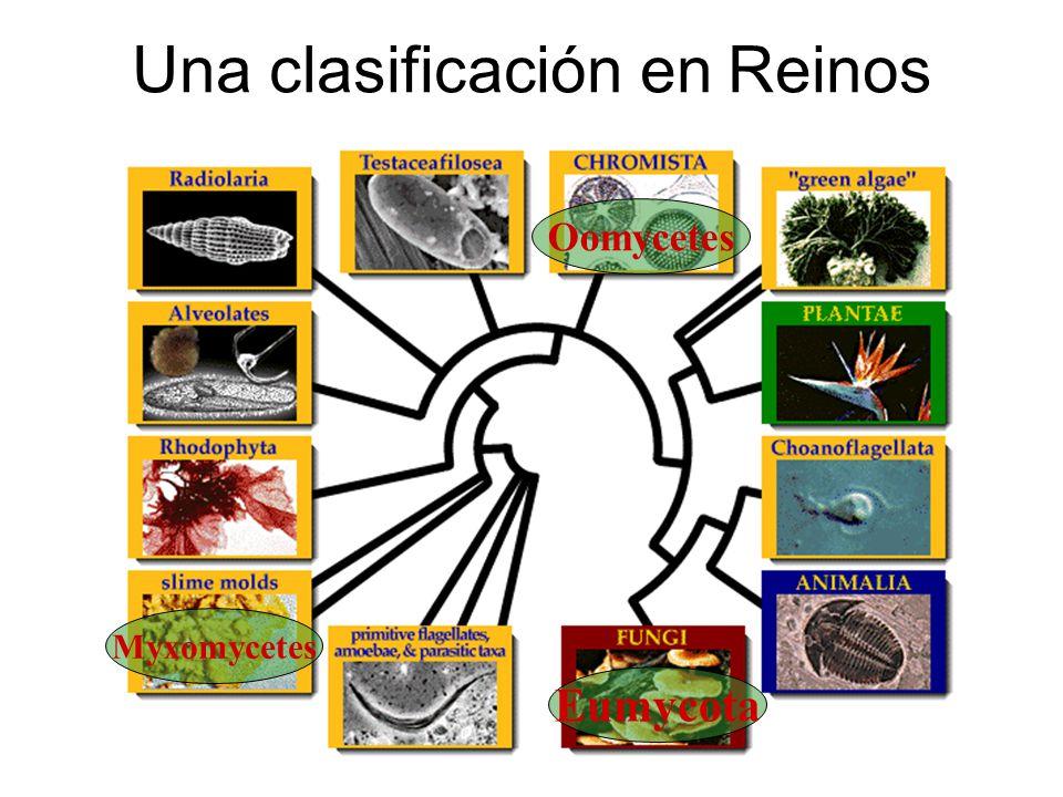 Una clasificación en Reinos