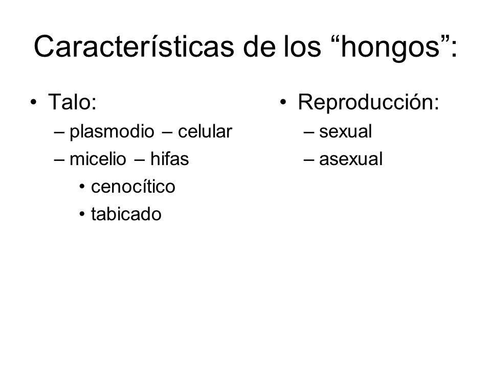 Características de los hongos :