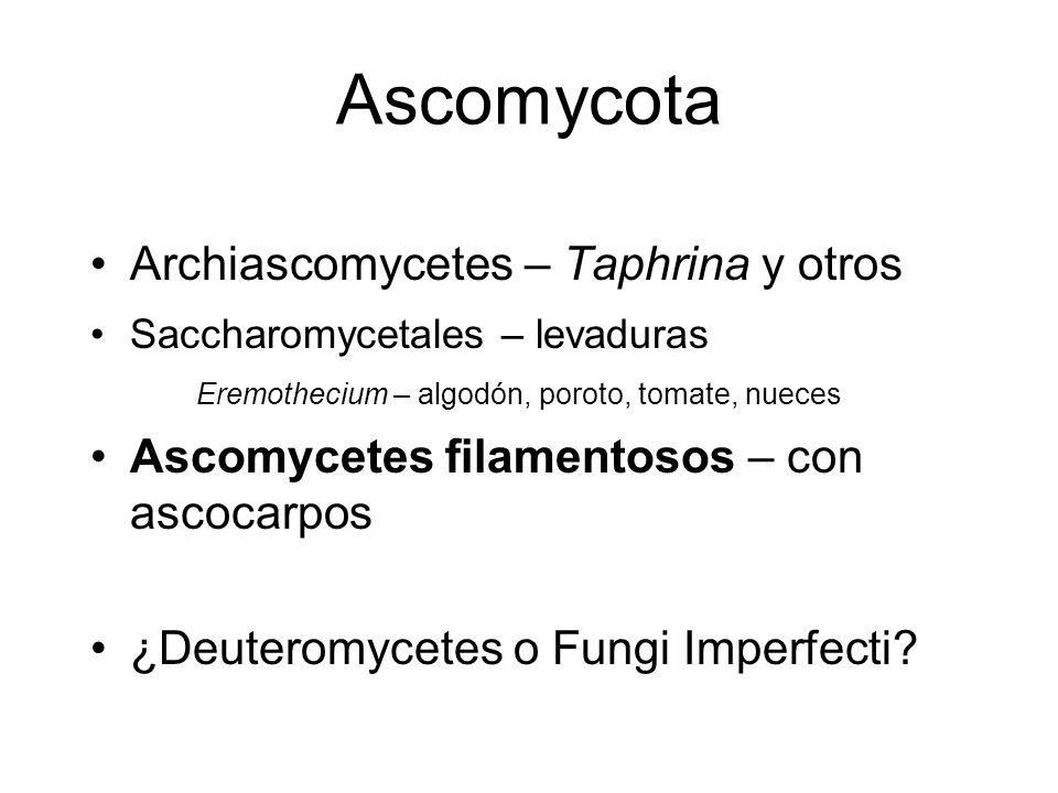 Ascomycota Archiascomycetes – Taphrina y otros