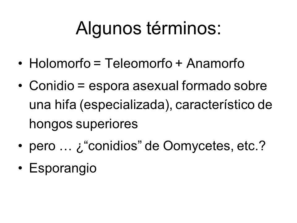 Algunos términos: Holomorfo = Teleomorfo + Anamorfo