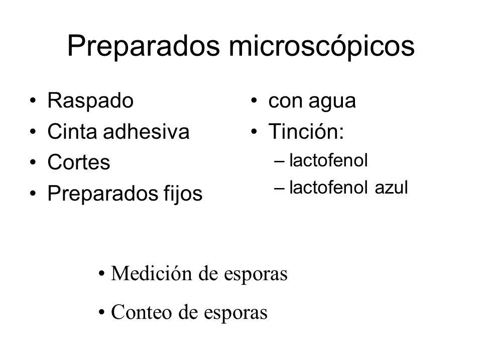 Preparados microscópicos