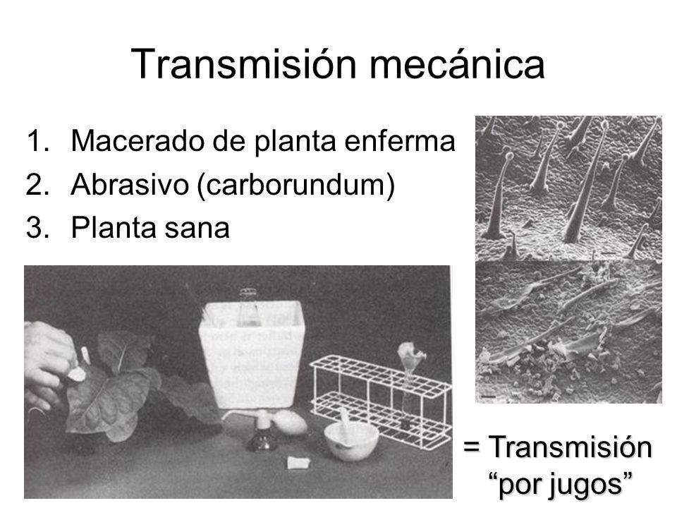 Transmisión mecánica Macerado de planta enferma Abrasivo (carborundum)