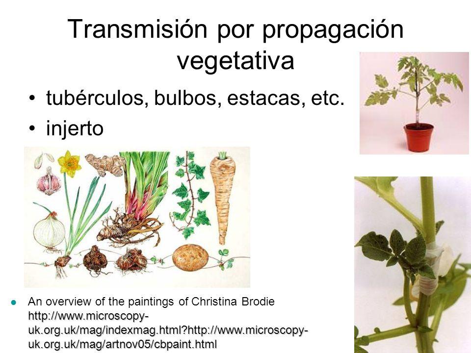 Transmisión por propagación vegetativa
