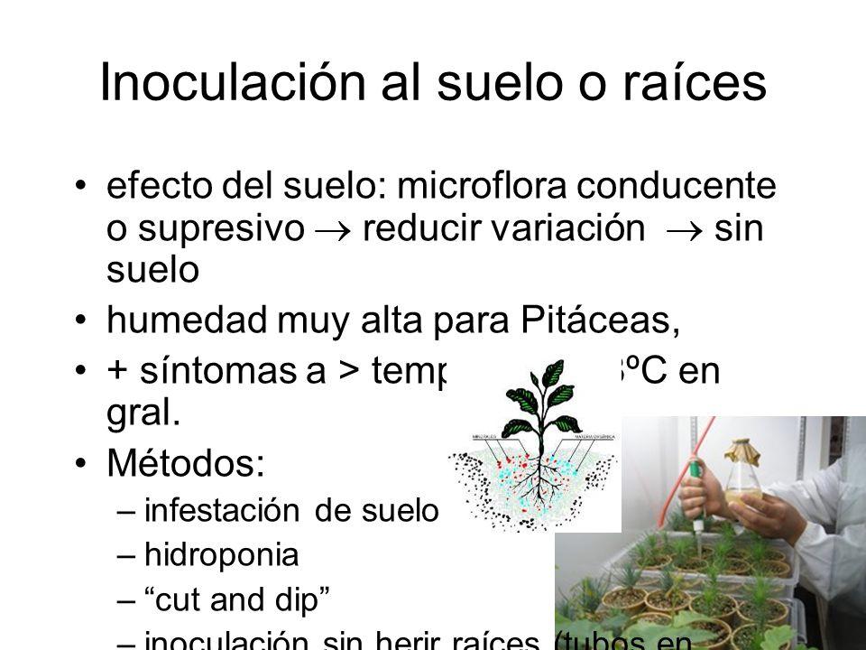 Inoculación al suelo o raíces